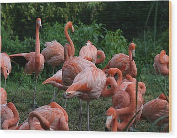 National Zoo - Flamingo - 12123 Wood Print by DC Photographer