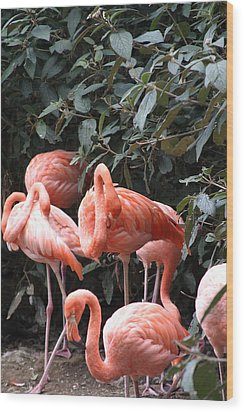 National Zoo - Flamingo - 12124 Wood Print by DC Photographer