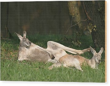 National Zoo - Kangaroo - 12124 Wood Print by DC Photographer