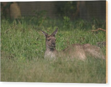 National Zoo - Kangaroo - 12125 Wood Print by DC Photographer