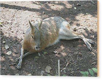 National Zoo - Kangaroo - 12126 Wood Print by DC Photographer