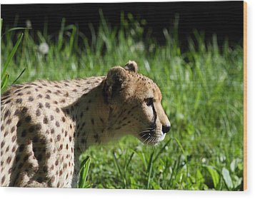 National Zoo - Leopard - 011316 Wood Print by DC Photographer