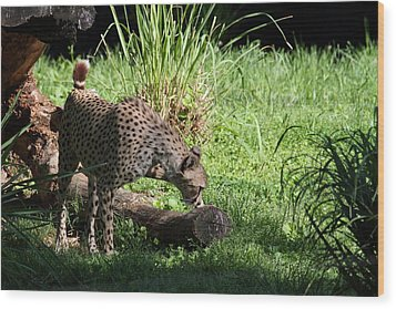 National Zoo - Leopard - 01136 Wood Print by DC Photographer