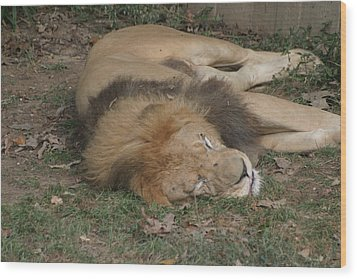National Zoo - Lion - 12121 Wood Print by DC Photographer