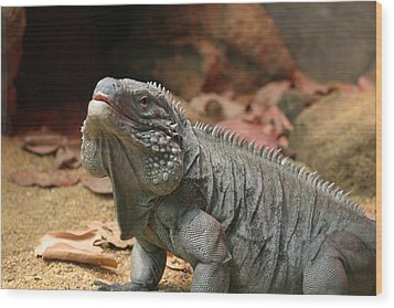 National Zoo - Lizard - 12121 Wood Print by DC Photographer