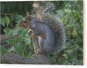 National Zoo - Mammal - 12123 Wood Print by DC Photographer