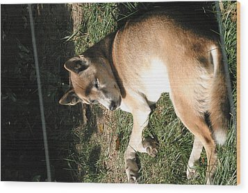 National Zoo - Mammal - 12124 Wood Print by DC Photographer