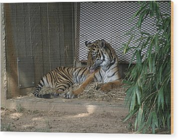National Zoo - Tiger - 12122 Wood Print by DC Photographer