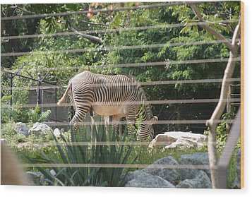 National Zoo - Zebra - 12121 Wood Print by DC Photographer