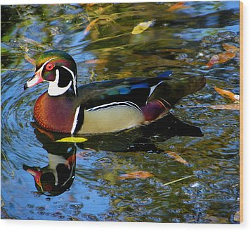 Natural Artwork    Male Wood Duck Wood Print