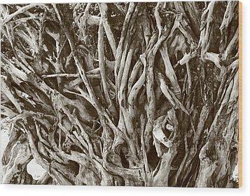 Natural Artwork Wood Print by Paula Brown