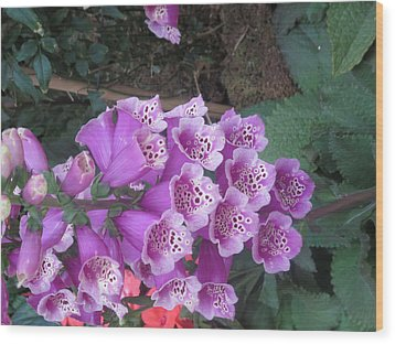 Wood Print featuring the photograph Natural Bouquet Bunch Of Spiritul Purple Flowers by Navin Joshi