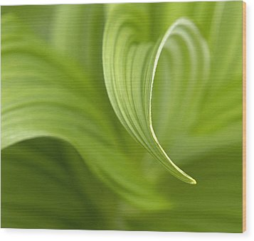 Natural Green Curves Wood Print by Claudio Bacinello
