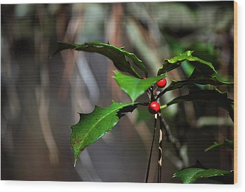 Wood Print featuring the photograph Natural Holly Decor by Bill Swartwout