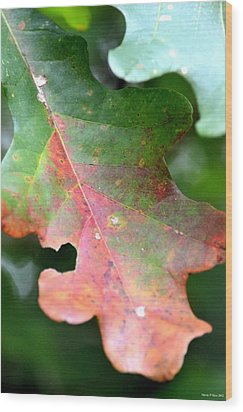 Natural Oak Leaf Abstract Wood Print by Maria Urso