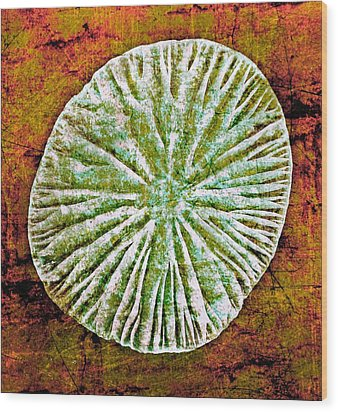 Wood Print featuring the digital art Nature Abstract 5 by Maria Huntley