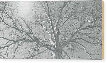 nature - art - Winter Sun  Wood Print by Ann Powell