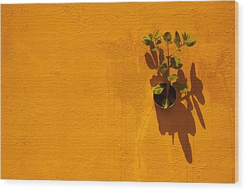 Nature Don't Stop II Wood Print