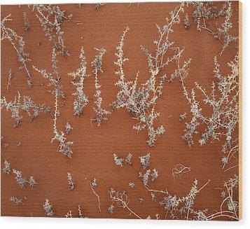 Nature Endures Wood Print by Diane Bohna