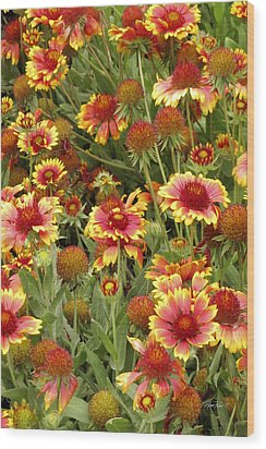 nature - flowers -Blanket Flowers Six -photography Wood Print by Ann Powell