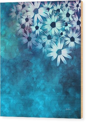 nature - flowers- White Daisies on Blue  Wood Print by Ann Powell