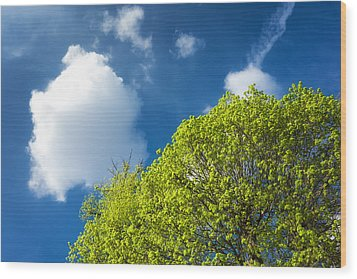 Nature In Spring - Bright Green Tree And Blue Sky Wood Print by Matthias Hauser