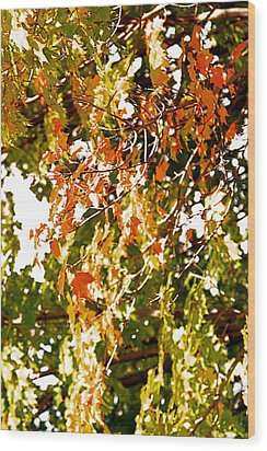 Nature In The City Wood Print by Jocelyne Choquette