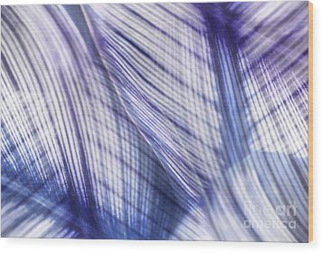 Nature Leaves Abstract In Blue And Purple Wood Print by Natalie Kinnear