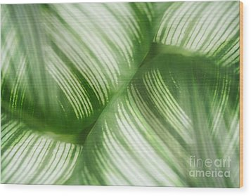 Nature Leaves Abstract In Green 2 Wood Print by Natalie Kinnear