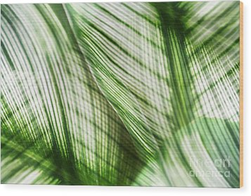 Nature Leaves Abstract In Green Wood Print by Natalie Kinnear