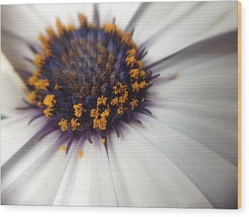 Wood Print featuring the photograph Nature Photography 11 by Gabriella Weninger - David