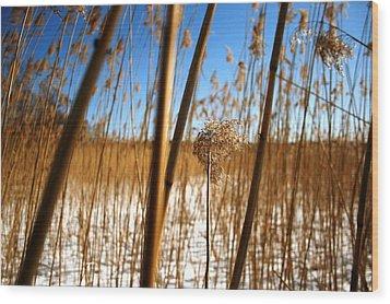 Nature Series 1.2 Wood Print by Derya  Aktas