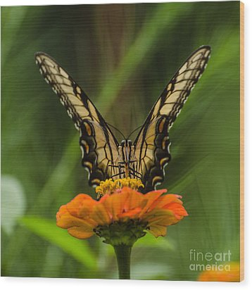 Nature Stain Glass Wood Print by Donna Brown