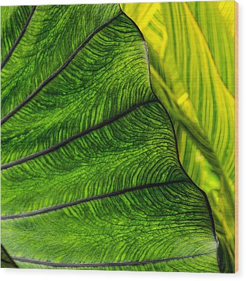 Nature's Artistry Wood Print by Jordan Blackstone