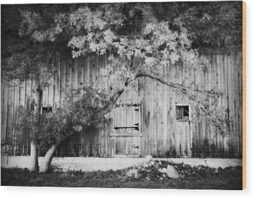 Natures Awning Bw Wood Print by Julie Hamilton