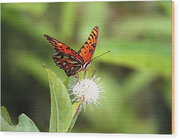 Natures Beauty Wood Print