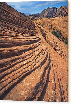 Nature's Concentric Circles Wood Print by Ray Mathis