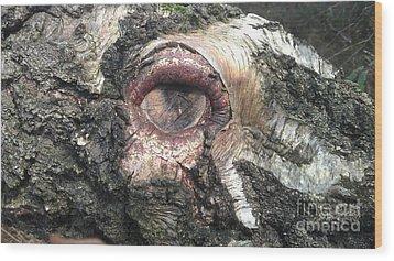 Natures Eye  Wood Print by Tom Salt