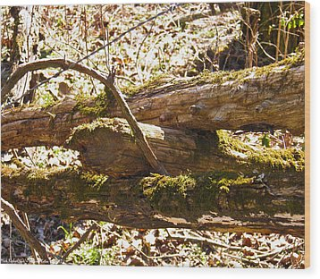 Wood Print featuring the photograph Natures Fence by Nick Kirby