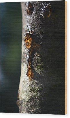 Natures Gold Wood Print by Jeffrey Platt