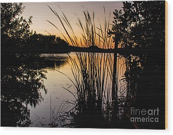 Natures Hidden Beauty Wood Print by Rene Triay Photography