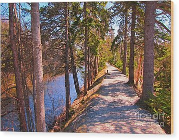 Natures Highway Wood Print by John Malone