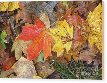 Wood Print featuring the photograph Nature's Palette by Jim McCain