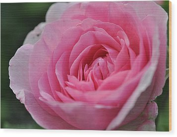 Wood Print featuring the photograph Nature's Pink by Sabine Edrissi