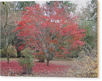 Wood Print featuring the photograph Nature's Red by Linda Prewer