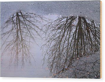 Wood Print featuring the photograph Nature's Reflection  by Candice Trimble