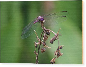 Dragonfly - Nature's Rose Wood Print