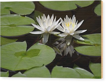 Nature's Snow White Water Lilies Wood Print by Linda Phelps