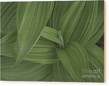 Natures Splendor  Wood Print by Alana Ranney