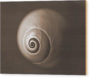 Nautilus In Sepia Wood Print by Deborah Smith